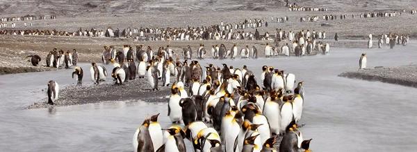 Preisgekrönte Pinguine